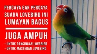Mp3 Ampuh, Suara Pancingan Lovebird agar bunyi ngekek nya bagus