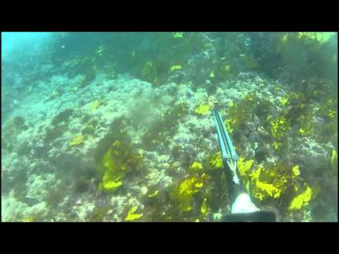 Wet Dreams - Spearfishing The Illawarra