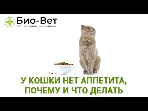 Если кошка болеет и не ест