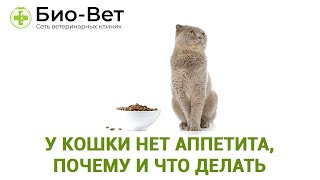 У кошки нет аппетита, почему и что делать. Ветеринарная клиника Био-Вет.