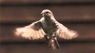 Tin Sparrow--On My Own (Album Version)