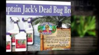 How To Control Budworms on Petunias | Use Captain Jack's from www.Bonide.com