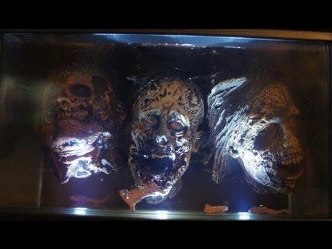 Setup Display The Walking Dead S 3 Best Exclusive L Edition Governor Zombie Head Aquarium