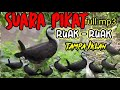 Suara Pikat Ruak Ruak Full  Mp3 - Mp4 Download