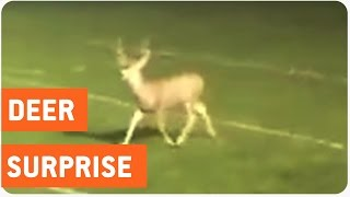 Deer Crashes High School Football Game | Rein-deer Delay