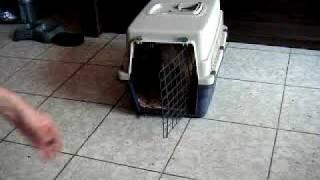 Clicker Kennel Training