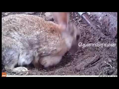 Hii honey shig video