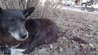 18.03.15 г.Липецк.Избитая собака с ул.Вавилова..