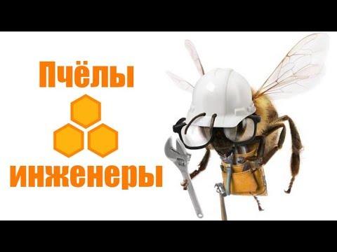 Пчёлы-инженеры