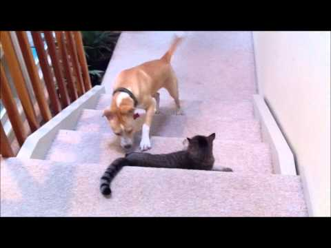 Dog vs. cat (dog wins this round)