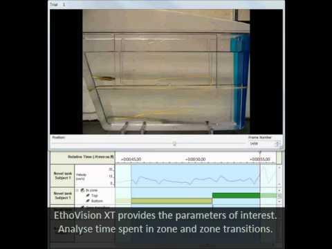 Noldus Solutions For Zebrafish Behavioral Research