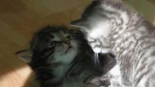 un, deux, trois, trois petits chats...