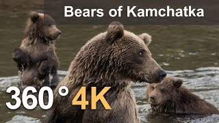 360°, Bears of Kamchatka. Kambalnaya River, 4K aerial video thumbnail