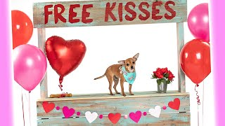 Dog Kissing Booth | Valentine's Day Dog Photoshoots