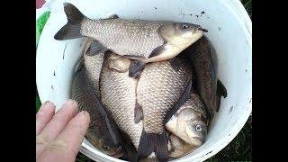 Супер рыболовная насадка --НЕЗАБУДКА-- Бегом в АПТЕКУ пока не размели.  КАРАСЬ, КАРП, ЛЕЩ