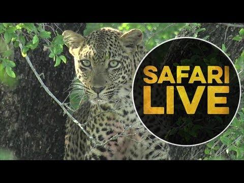 safariLIVE - Sunrise Safari - May 17, 2018