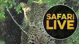 safariLIVE - Sunrise Safari - May, 17. 2018 thumbnail