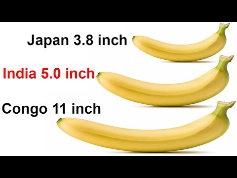 Top Countries With Largest Pen¡s Sizes & Smallest Penis Sizes | Size Comparison