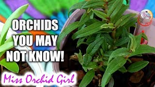 New Orchid species and hybrids of 2018 - Updates and first time appearances