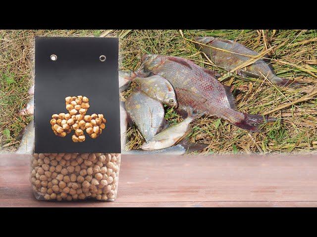 Как приготовить и использовать горох для рыбалки