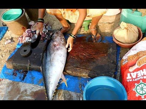 Tuna Fish Cutting In Malvan Fish Market