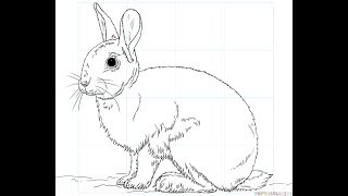 How to Draw a Cute Bunny Rabbit Easy step by step draw for children