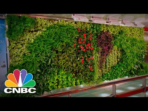 'Living Scaffold' Green Wall Hides Unsightly Construction While Decreasing Air Pollution | CNBC