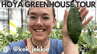 Hoya greenhouse tour Kek Jekkie   Plant with Roos