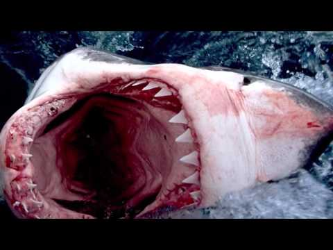 ТОП-10 Самых больших акул.