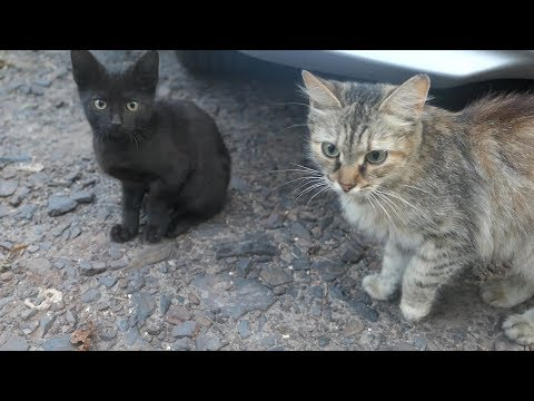 Kittens with cats, big family