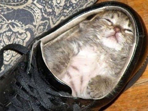 Supermüde Katzen beim Einnicken