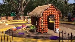 Creating the Wonderful Wizard of Oz in the Pumpkin Village at Autumn at the Dallas Arboretum