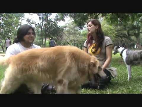 V1 - O que é preciso para ser um Dog Walker