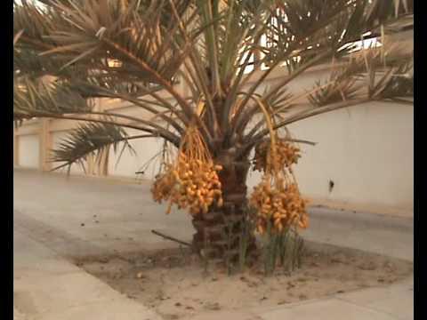 S P NAIR  DATES  VIDEO FROM  WAKRA DOHA QATAR.
