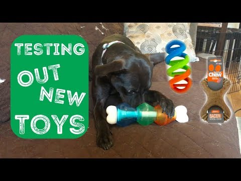 my-dogs-trying-out-new-toys