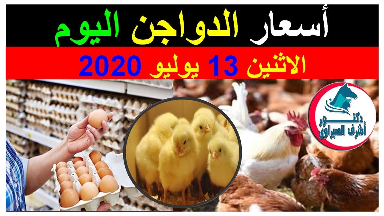 أسعار بورصة الدواجن والكتاكيت والبط والسمان |وأسعار بيض المائدة والعلف اليوم الاثنين 13 / 7 / 2020 !