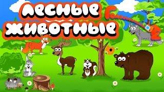 Лесные животные Развивающее видео для детей