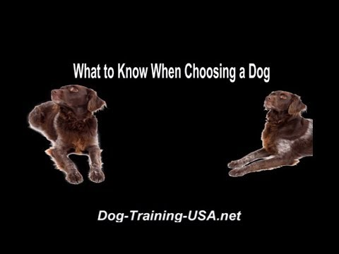 What to Know When Choosing a Dog