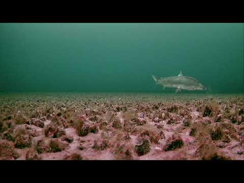Simcoe Whitefish And Fresh Water Shrimp