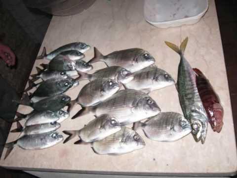 Pesca Con Palamito A Vela O Conzo Youtube