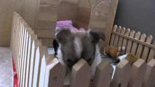 Puppys deel 1