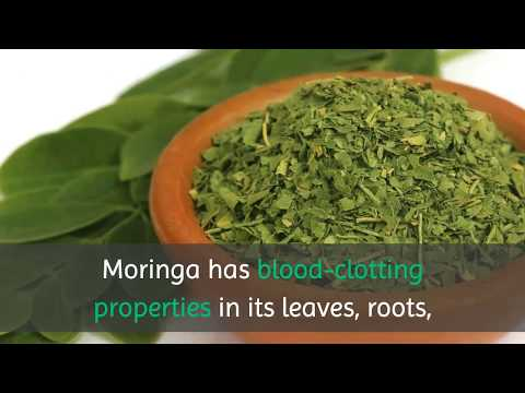 10 Benefits of Drinking Moringa Tea Everyday