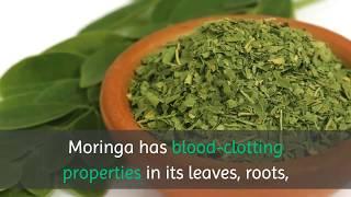 10 Benefits of Drinking Moringa Tea Everyday