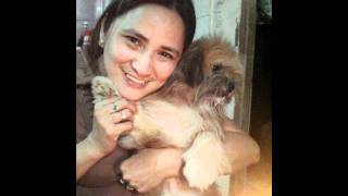 Mixed Shih Tzu & Chihuahua Puppy (his 1st Bday)