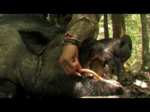 Stone Creek Hunting Ranch - Mitch Aski's 400lb Boar