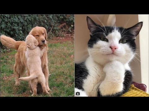Cute Baby Dog And Cat Videos Compilation Moment Of The Animals 2018 Try Not To Laugh 6