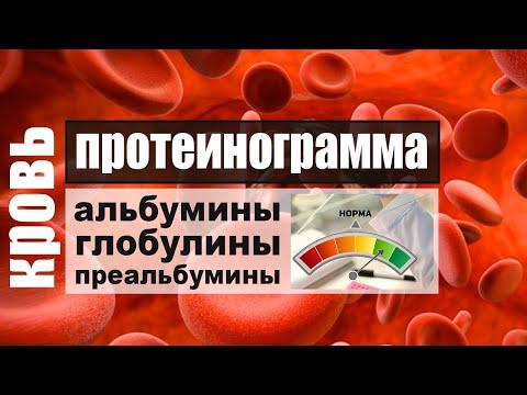Протеинограмма. Белковые фракции крови: альбумины, глобулины, преальбумины