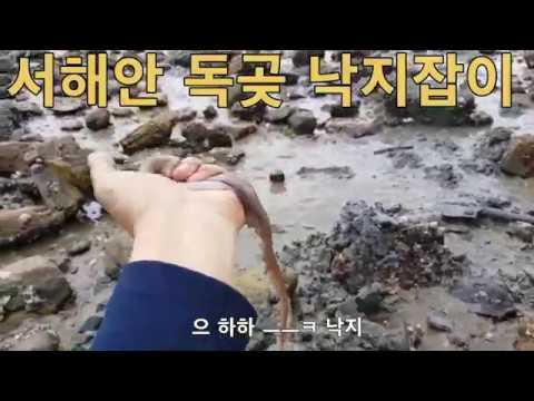 충남 서해안 대산 독곶 바닷가 갯벌 낙지잡이 ,해루질,결과는? 마지막 부분에 나와요 ^^タコ釣り,Octopus Catch
