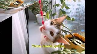 Котенок Белка
