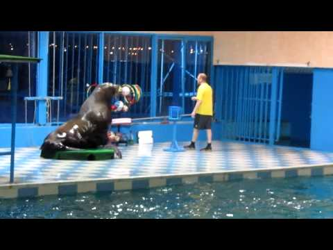 Seal's magical performance @ the dolphin show dammam